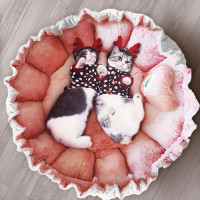 Petal Cat Mat Cat Nest Four Seasons Universal