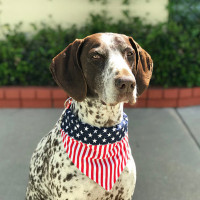 Dog Bandana American Flag