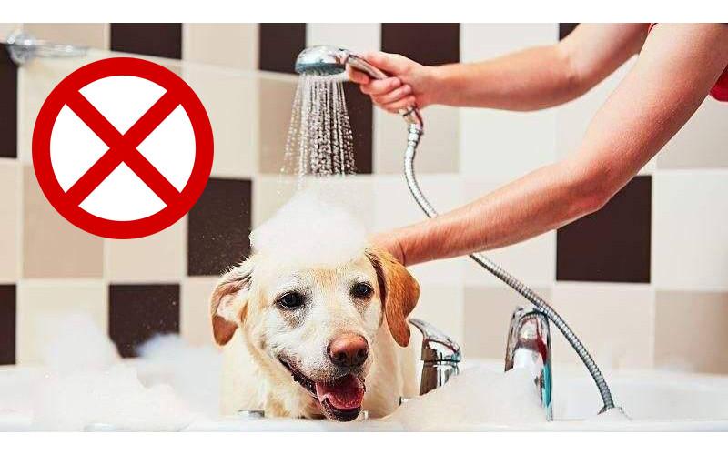 7 Situations You Shouldn't Bathe Your Dog