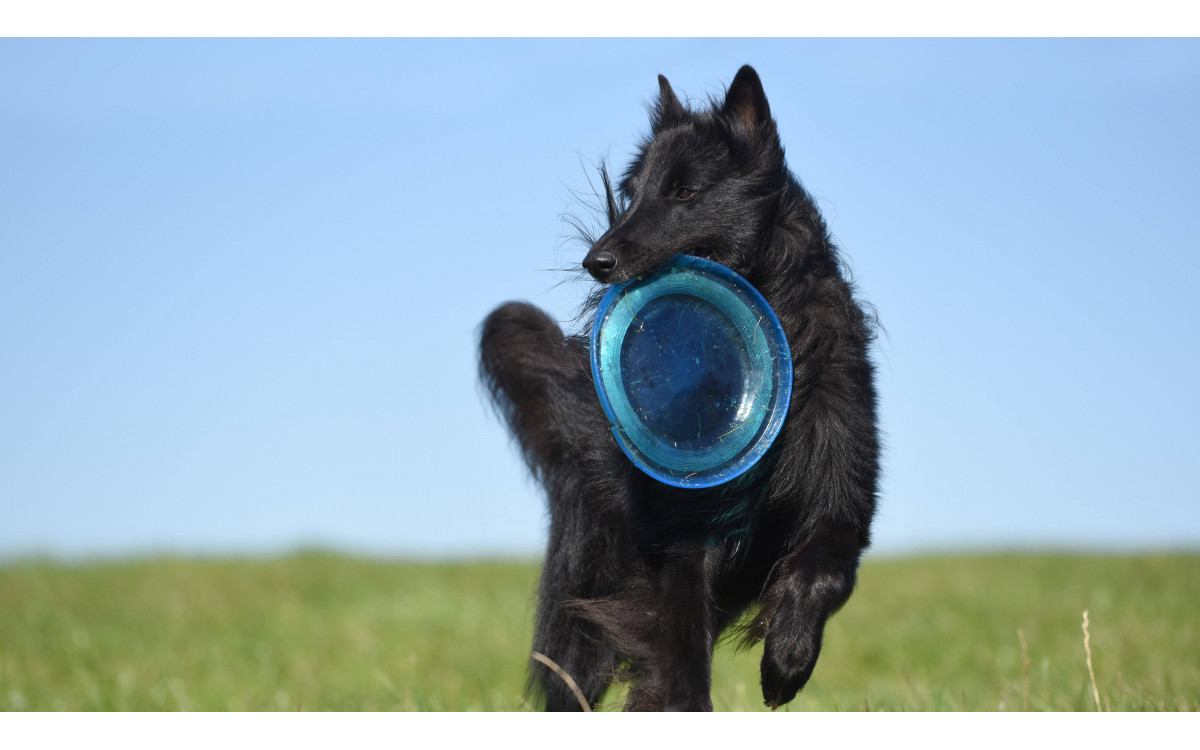 4 Basic Dog Training Skills