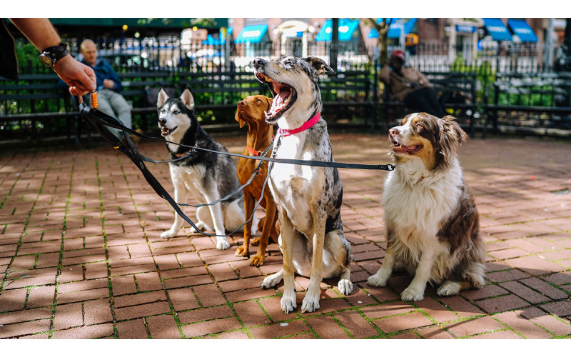 Tips About Choosing Dog Collars