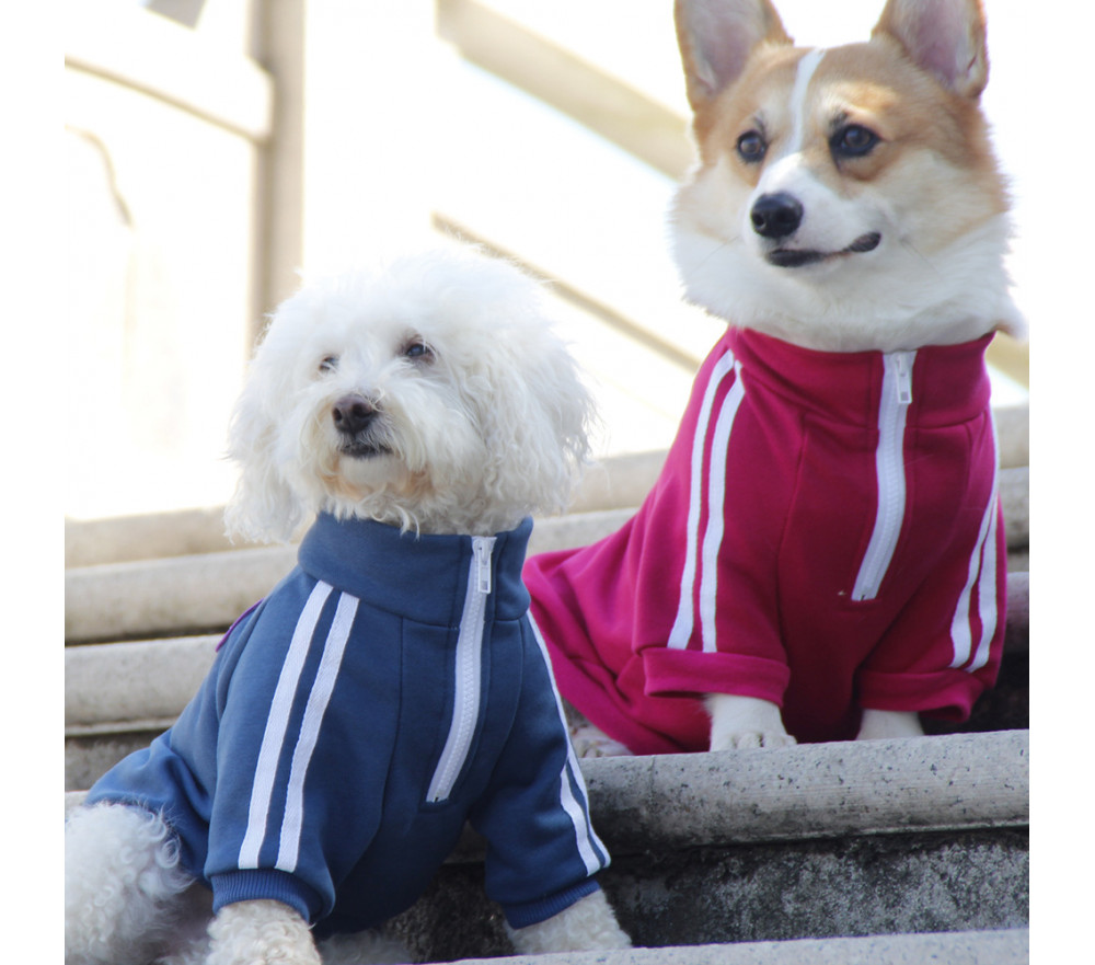 Sportswear Style Dog Coat for Small Dogs