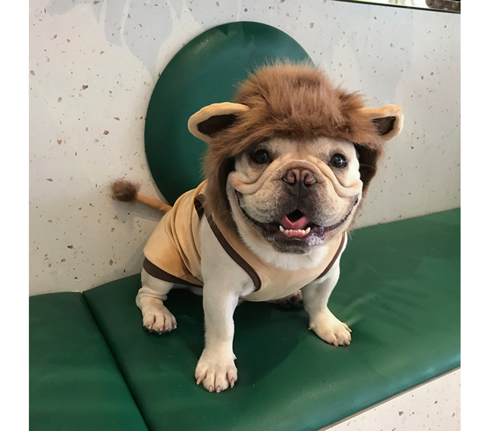 Lion Costume for Dog Special Sale
