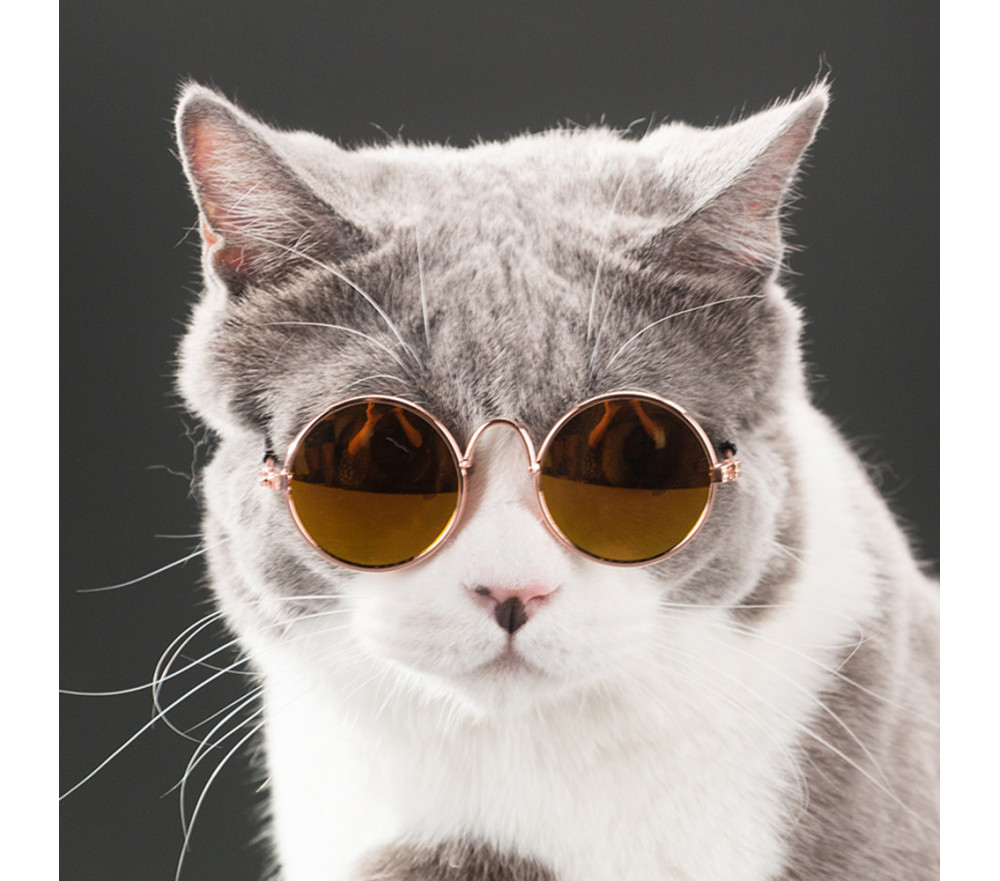 Round Sunglasses for Small Pets