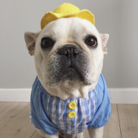 Round Brim Yellow Hat for Dogs Flash Sale