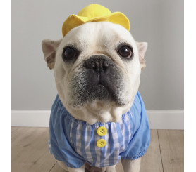 Round Brim Yellow Hat for Dogs