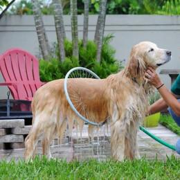 Portable Dog Bath 360° Washer Shower Hose Attachment