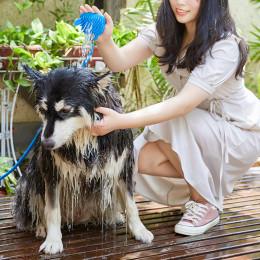 Dog Grooming Sprayer Brush Shower Attachment