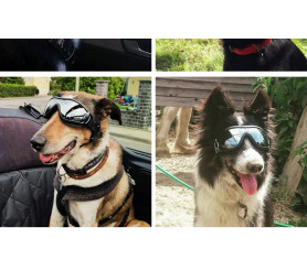 Dog Windproof Waterproof Sunglasses