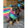 dog-socks-11622107907.jpg