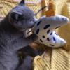 little-chicken-toy1614670039.jpg