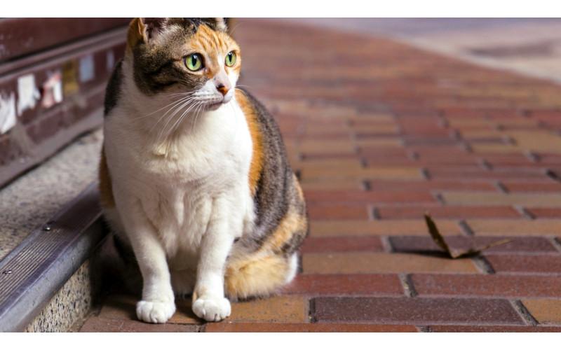 Dietary Advice for Senior Cats