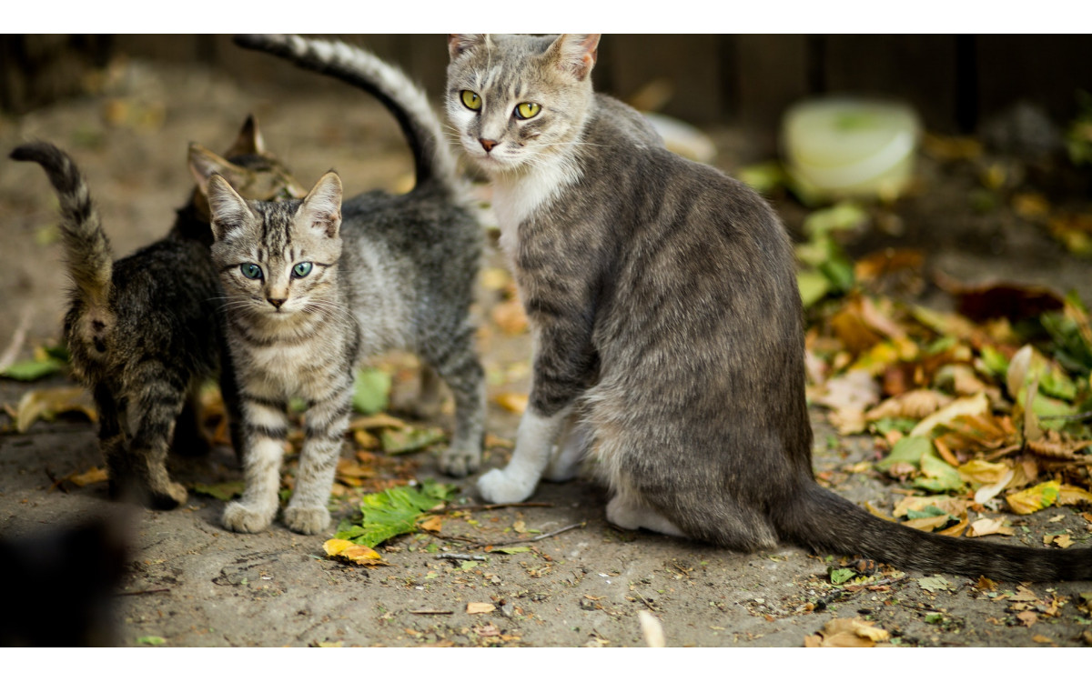 How to Take Care of a Pregnant Cat? (2)