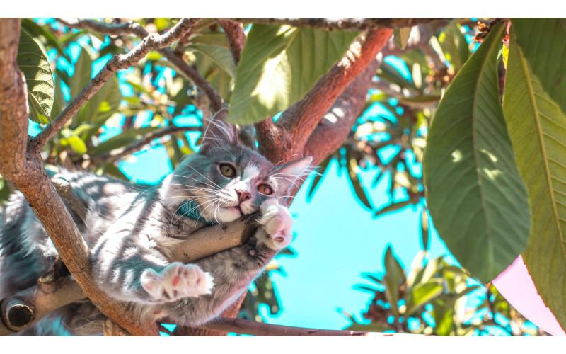 Feline Habits