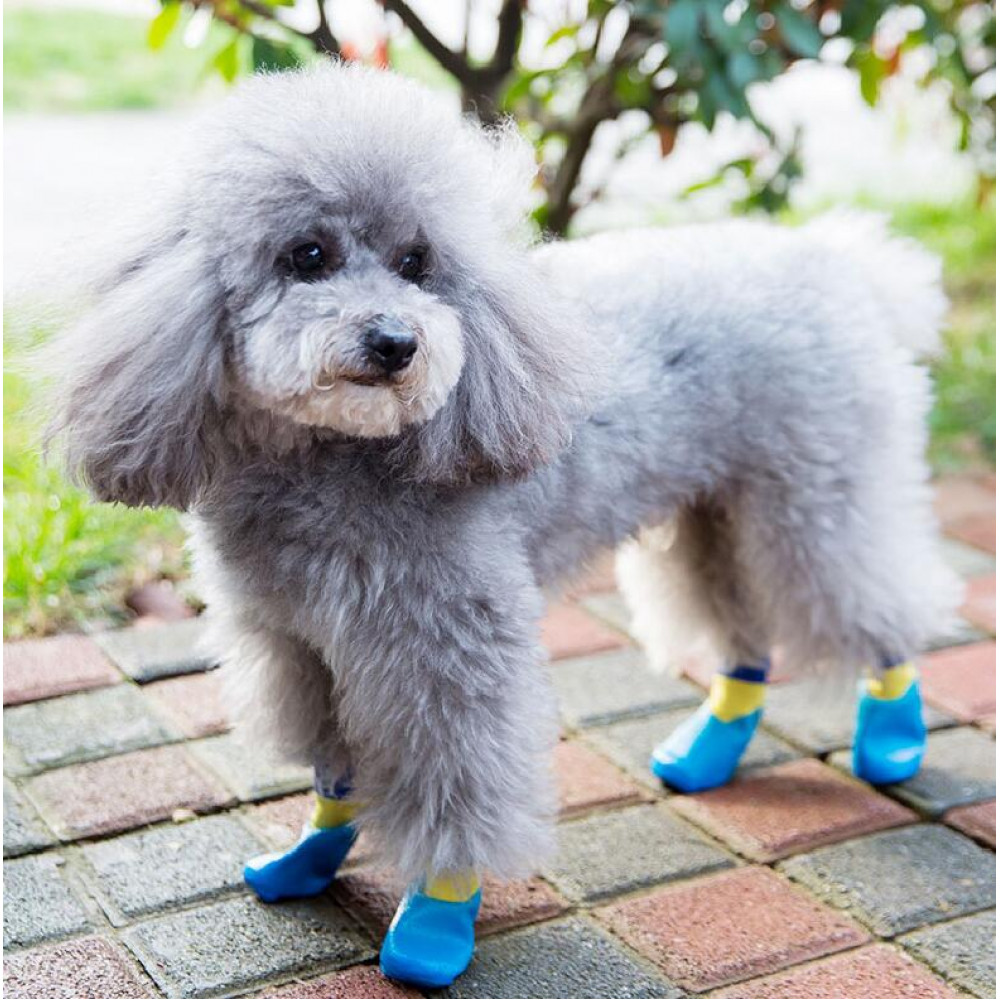 dog water shoes, dog boots, waterproof dog boots, best dog boots, dog shoes, dog rain shoes, dog snow shoes, dog running shoes, pet socks, dog paw covers, dog socks, dog boots for winter, dog shoes for heat