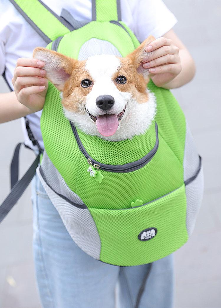 corgi dog in rose red backpack