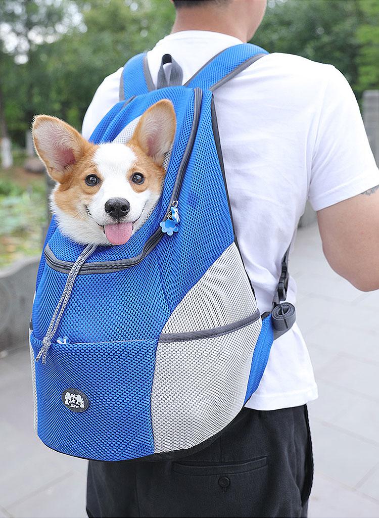 corgi dog in green backpack
