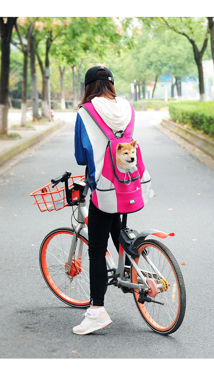 corgi dog in rose red backpack and going out