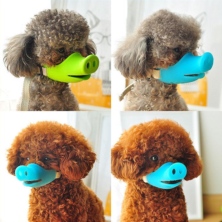 brown poodle wearing pig snout muzzle