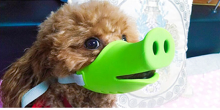 brown poodle wearing green pig snout muzzle