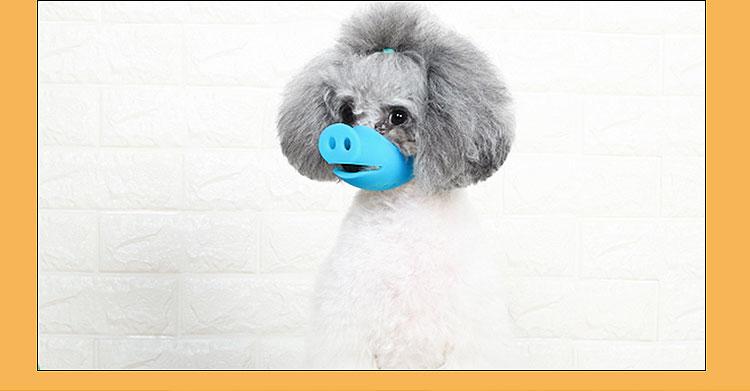 grey poodle wearing pig snout muzzle
