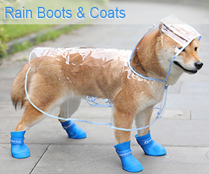 Dog Rain Boots and Coats