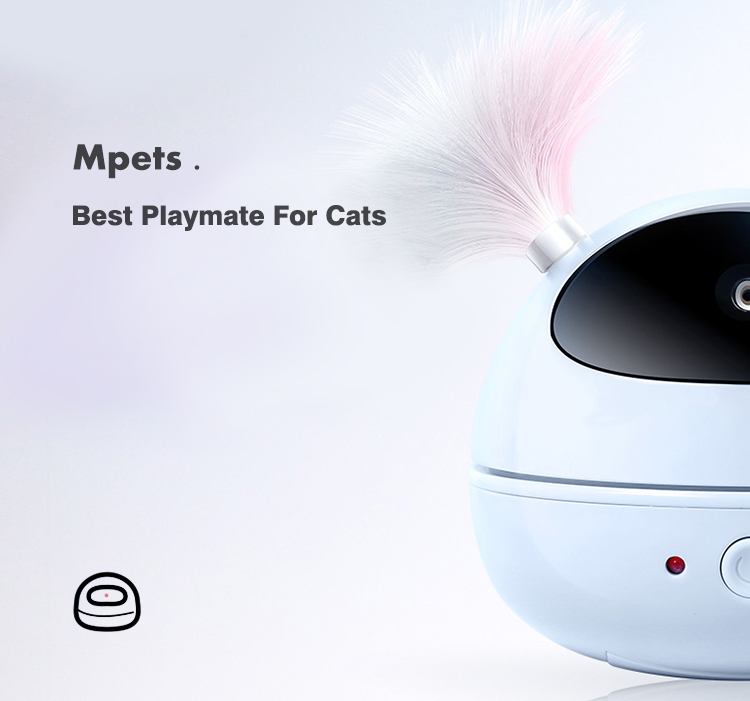 Best playmate for cats